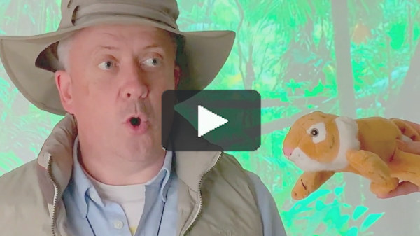 Lost in the Jungle Video